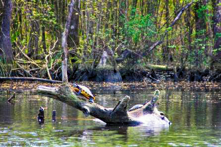 It's Time For Date Night On The Cape Fear River