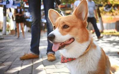 Things To Do With Pets In Downtown Wilmington