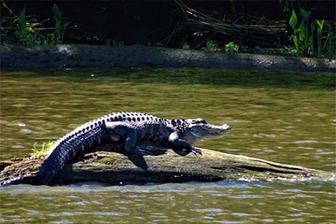 Black River Nature Cruise