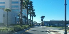 Palm trees line the median along San Marco Boulevard.