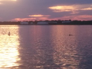 Dolphins in the St. Johns River, as viewed from Blue Cypress Golf Club in Arlington.