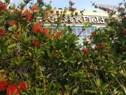 A scenic shot through the flowers at EverBank Field.