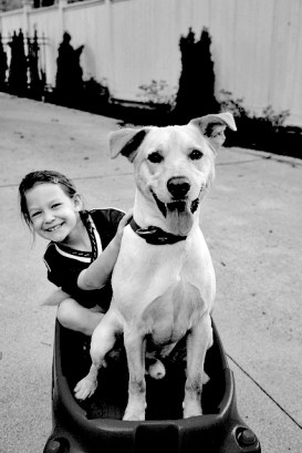 Sophie's family received their yellow Labrador from Santa in 2010. Sophie said Santa had named him Nugget, but her parents wanted a stronger name. Sophie and her family decided to call their new family member Lincoln, after the president, because of his quick learning and kind-hearted personality.