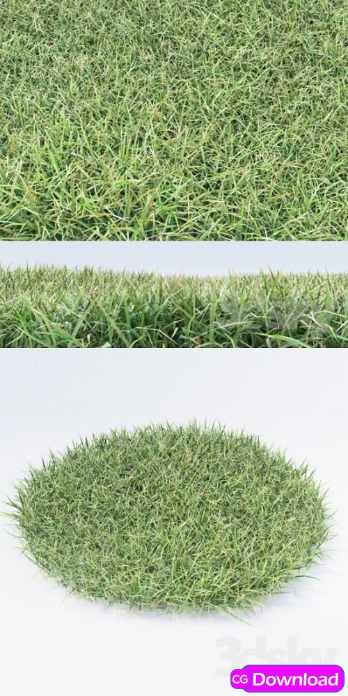 Download Grass 05 3d Model Free