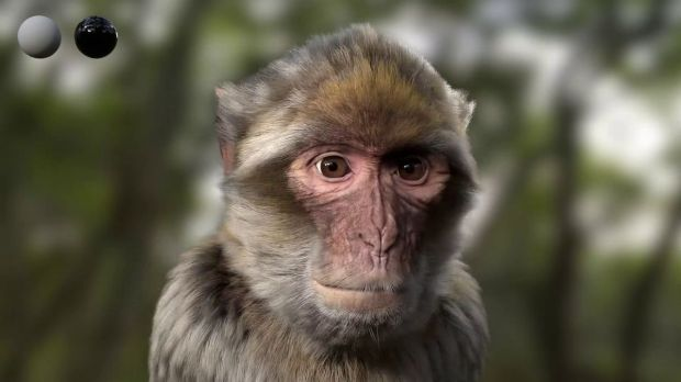 Barbary Macaque CGI Breakdown