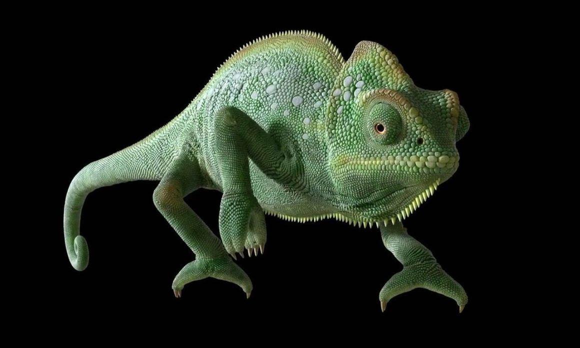 Making of JBL Chameleon