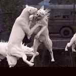 Zoo VFX Breakdown by Zoic Studios