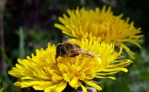 5 Ways Community Gardens Can Help Pollinators