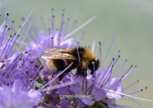 5 ways community gardens can help pollinators now