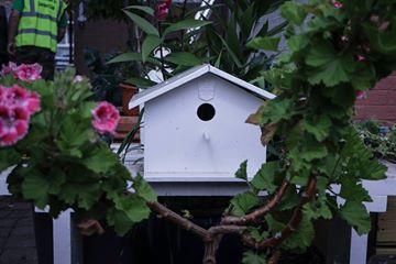 Hardwicke Community Garden Dublin