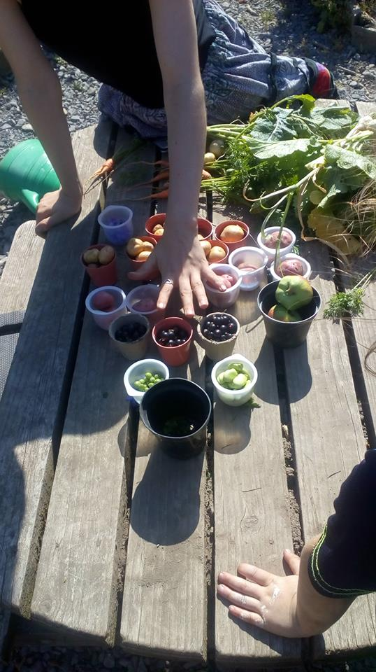 The Importance of School Gardens as a Community