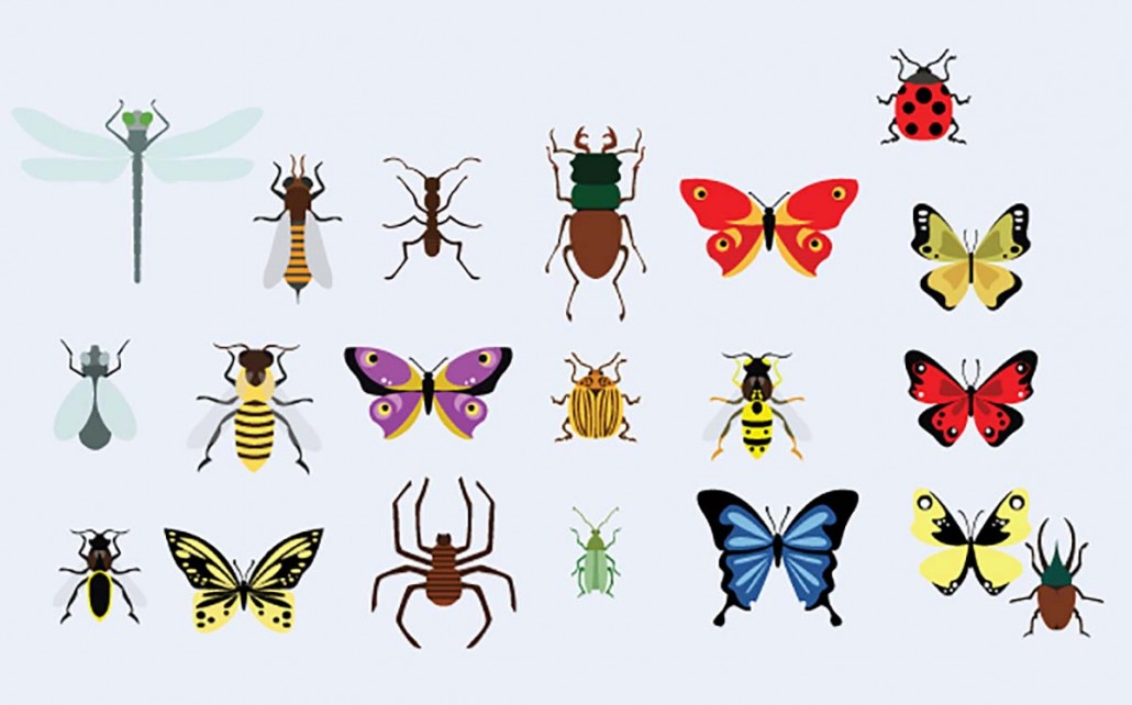 Bugs And Butterflies Vector Set Free Download