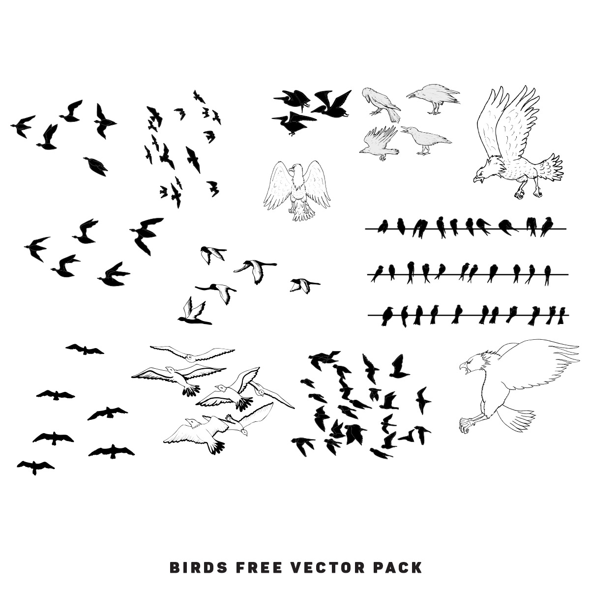 Birds Free Vector Pack