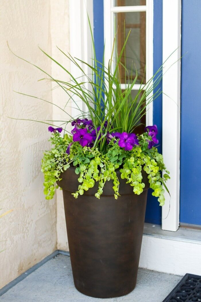Best front door garden pots for you that are inexpensive and simple to do.
