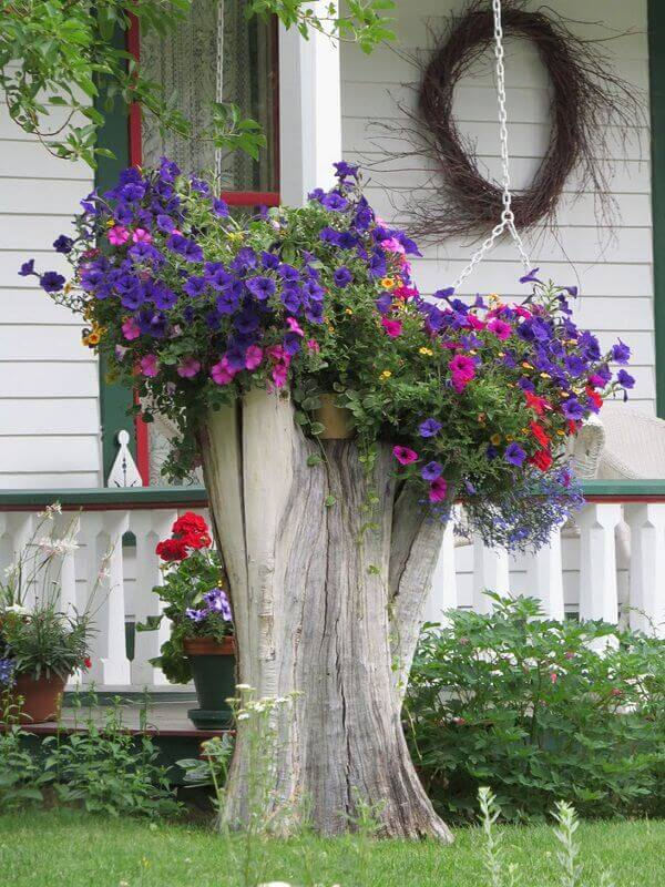 Modest yet Gorgeous and Appealing landscaping ideas for front yard to define your curb appeal for house owners - flowers and cacti other growing ideas