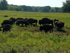 Sullys Hill Buffalo