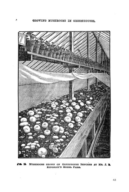 How to Grow Mushrooms: A 19th-Century Approach image 3