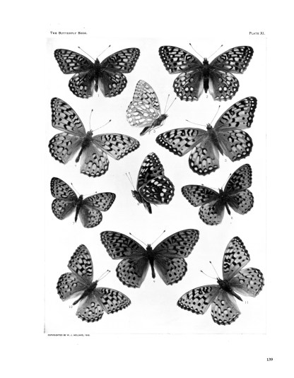 The Complete Butterfly Book: Enlarged Illustrated Special Edition image 10