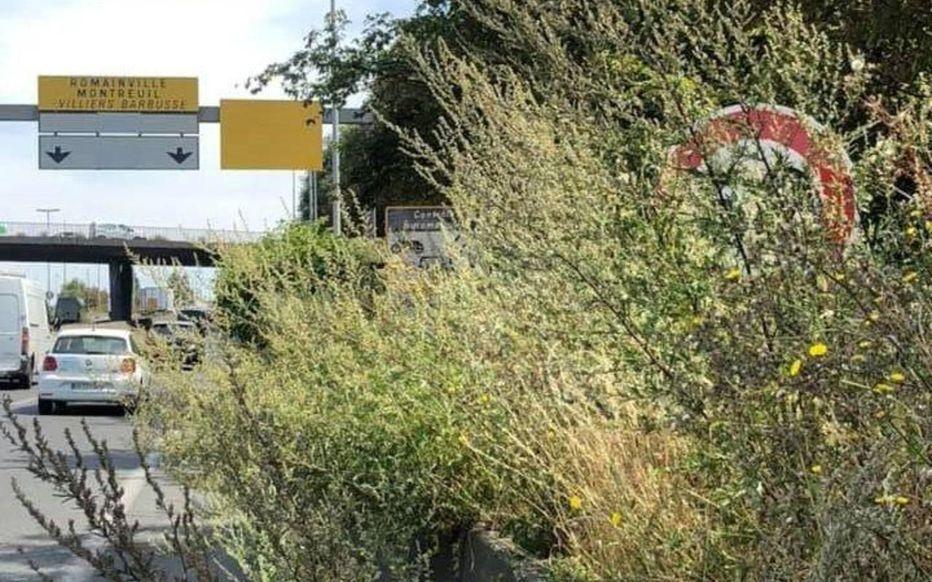 Autoroute A3 : un panneau et un radar masqués par des herbes et les PV tombent à la chaîne