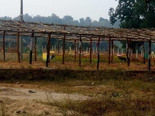 मुख्यमंत्री के महत्वाकांक्षी योजना गोठान निर्माण का बुरा हाल, लकड़ी की बल्ली से बना दिया गोठान का शेड, गोठान चौकीदार का नहीं बनाया कमरा