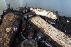 Bugs... Beetles!! Kids here love 'em!!