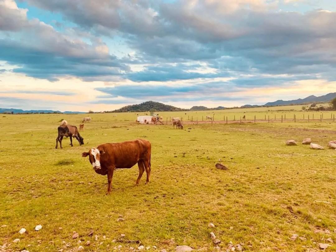 Bolivia Chaco Landscape