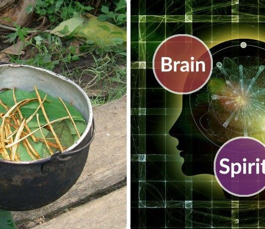 ayahuasca mental health