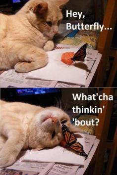 funny-cat-butterflies-love-petting