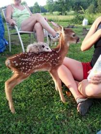 whatever-happens-dont-say-awww-27-photos-10