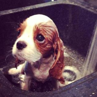 whatever-happens-dont-say-awww-27-photos-5