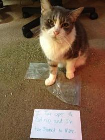 cat-shaming-4