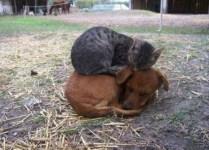 everyone-needs-a-snuggle-buddy-12