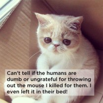 shower-thoughts-by-cats-20-photos-2