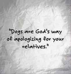 Thanks-dogs