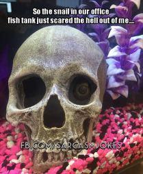 funny-snail