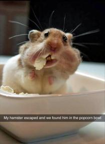 funny-animals-243