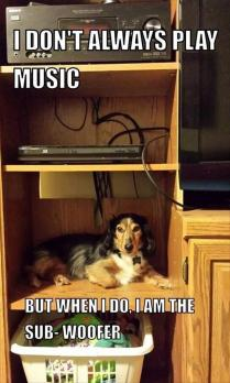 the-funny-animals-112