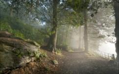 fog_mist_nature_landscapes_trees_forest_woods_leaves_fence_mountains_sunrise_1920x1200