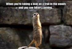 best-damn-photos-see-hikers-coming
