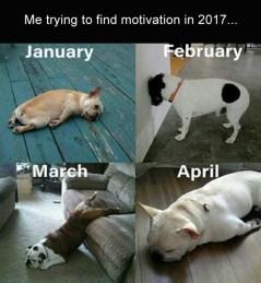 best-damn-photos-2017-motivation-dogs
