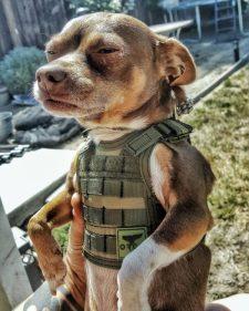 best-damn-photos-puppy-flack-jacket