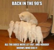 best-damn-photos-90s-dogs