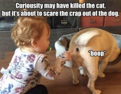 best-damn-photos-curiosity-cat