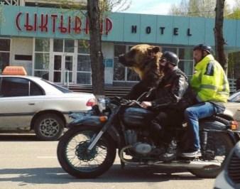 best-damn-photos-motorcycle-bear