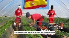 العمل الموسمي في إسبانيا