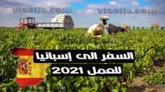 عقود العمل الموسمية في إسبانيا .. بدأ عملية اختيار 10 ألف عقد عمل لمزارعين مغاربة (بالكونطرا)