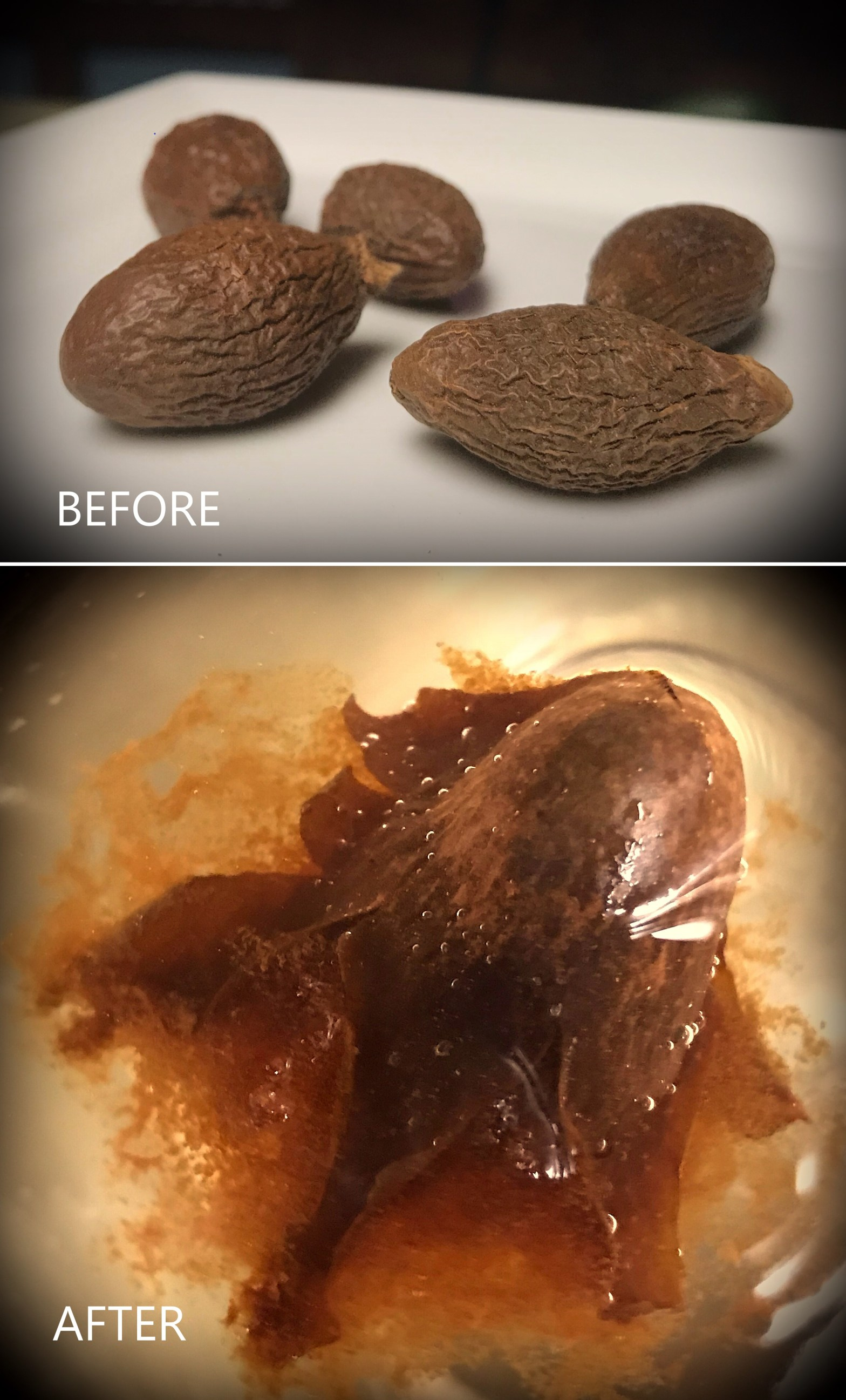 Pang Da Hing aka Sterculia Seed Chinese herb. Image of hard seed before and expanded soft mesh after steeping in hot water