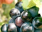 vignes & vignobles