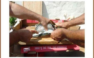 découpe du poisson