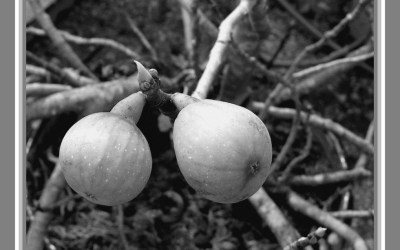 2 figues